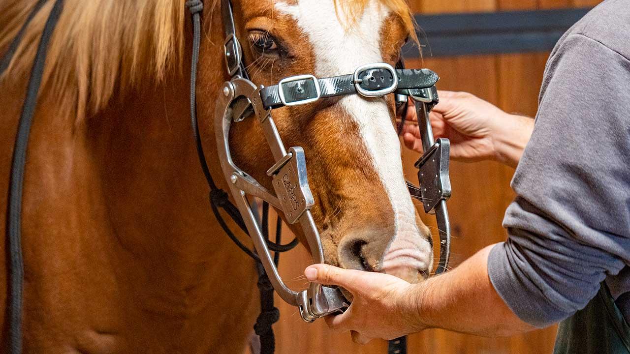 Equine Dentistry 01